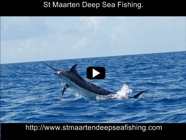 St maarten fishing deep sea fishing st martin home for Majesty deep sea fishing